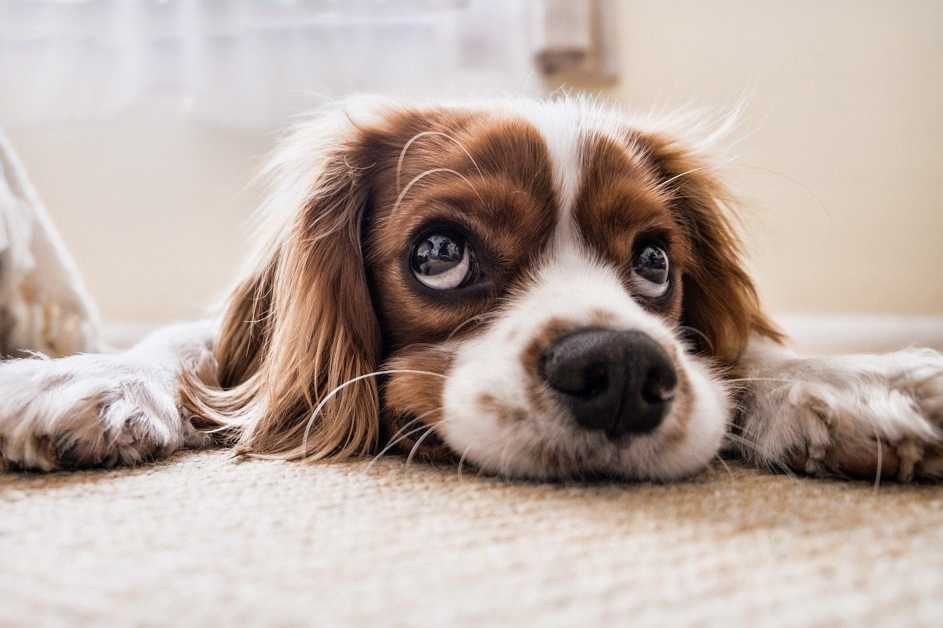Comment choisir la bonne taille de tapis ?